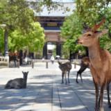 【奈良の鹿】吉井勇人容疑者のTwitter顔画像と勤務先はどこ?